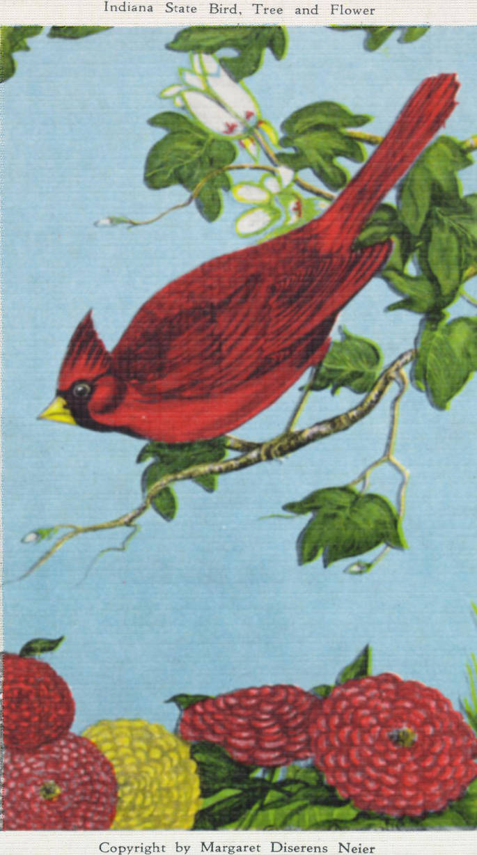 Indiana State Symbols State Bird Cardinal State Tree Tulip Tree