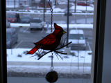 A cardinal in my window